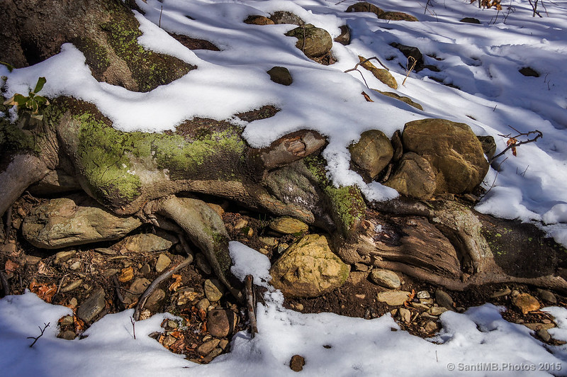 La nieve cubre las hojas del suelo del bosque