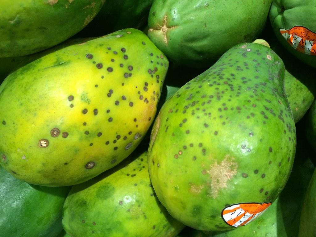 Papaya: Black spot | Pathogen: Asperisporium caricae ...