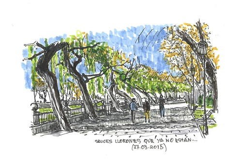 Burgos. Sauces llorones (Salix babylonica)