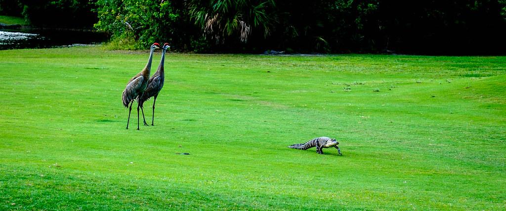 Sandhill Crane Golf Course Palm Beach Gardens Florida