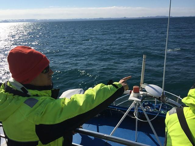 Sele buscando ballenas en el Ártico