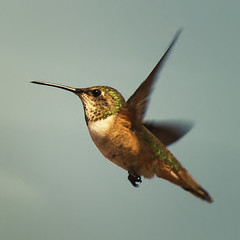 Audubon news about birds and climate