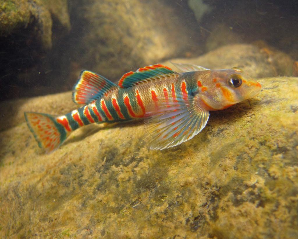 Freshwater fish marketing act - Fish