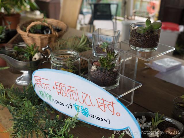 東南植物楽園-32