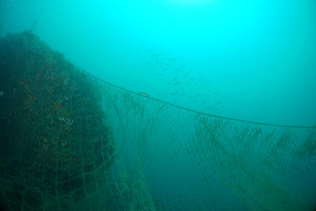 死亡之牆流刺網。圖片來源:蔡馥嚀。
