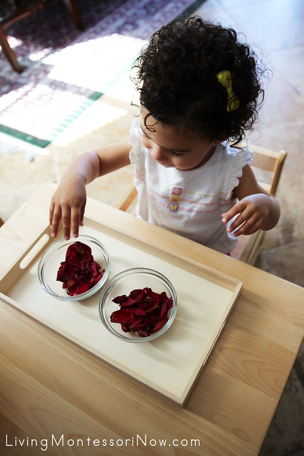 Transferring Flower Petals at 18 Months