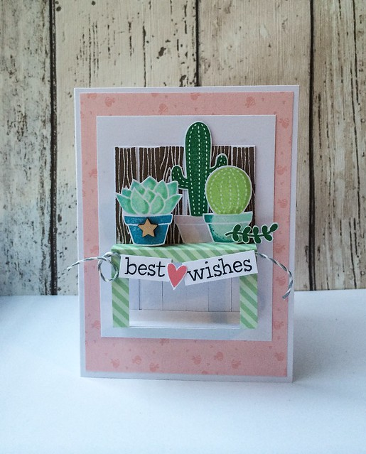 Cacti Wishes!