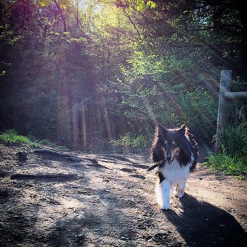 Jasper: Sun God