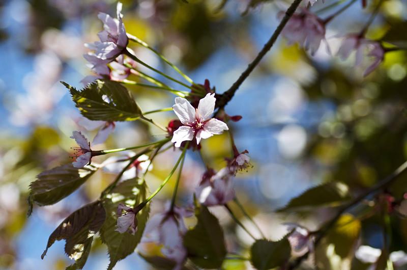 kirsikka12