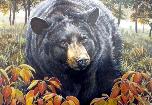 Illustration of Black Bear from Conservation Stamp
