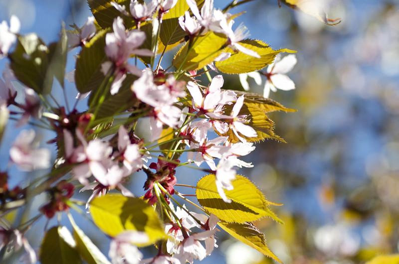 kirsikka10