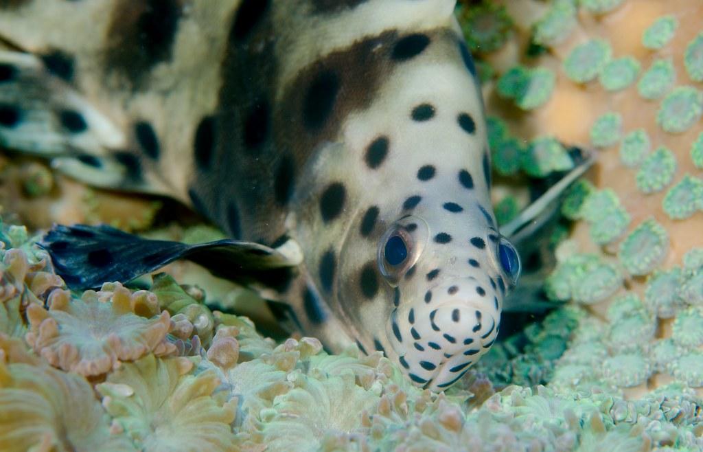 Fish_24