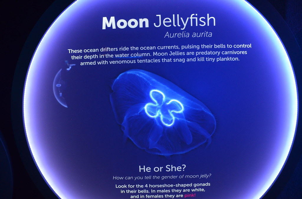 signage for moon jellyfish