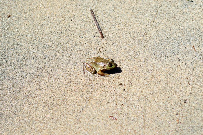 25_plage-oka-grenouille