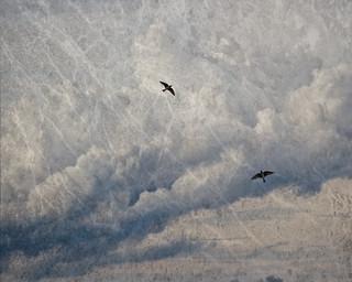 Dramatic Sky w Birds