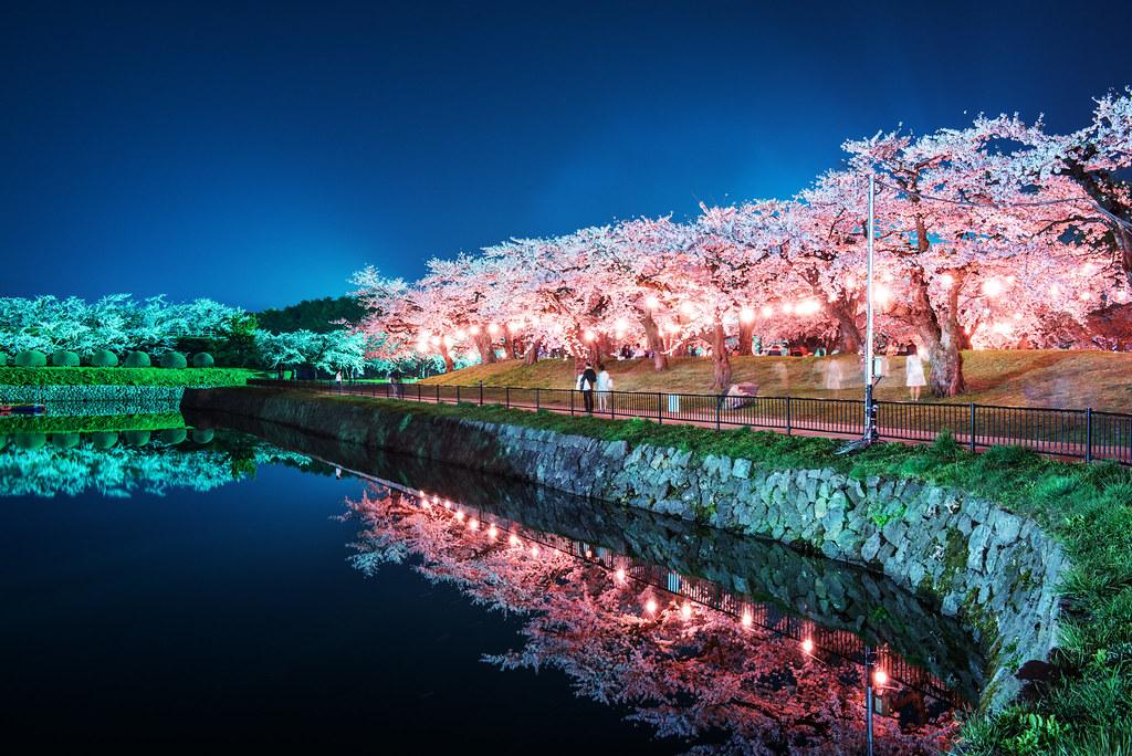 Kinh nghiệm du lịch Nhật Bản tự túc | ngắm hoa anh đào Nhật Bản
