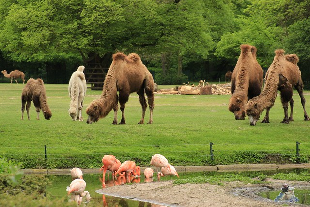 Tierpark Berlin 10.05.2015  47