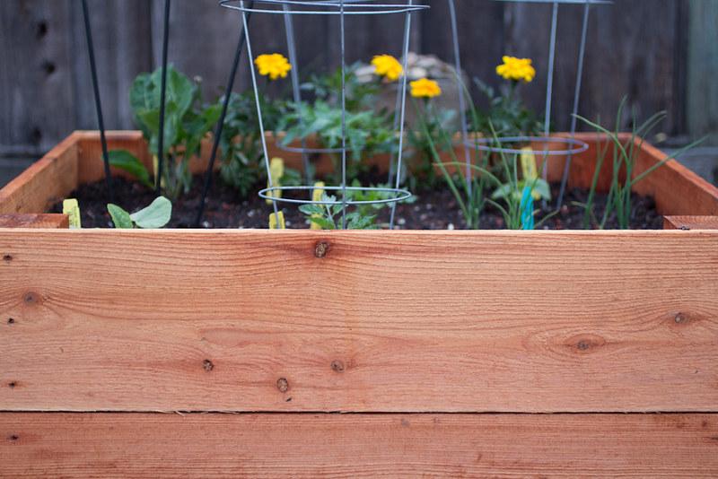 newest garden box