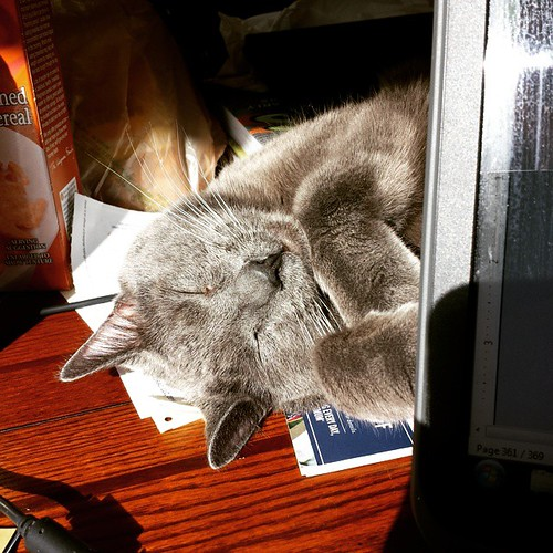 Constant companion. #Lester #CatsOfInstagram