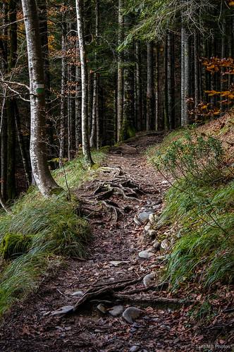 Las raíces de los árboles asoman por el sendero.