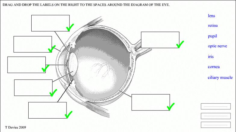 The eye worksheet images worksheet math for kids label the eye worksheet ccuart Image collections