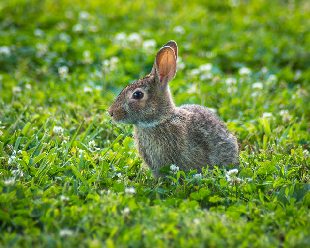 Bunny, Rabbit, Hare, Grass, Green, Brown, Cute