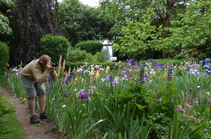 Seen at Schreiner's Iris Gardens - No. 4 - Leland