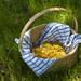 basket of honeysuckles