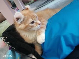 CIRCLEG CAT CAFE 貓貓地 香港 旺角 COOKING HEYHEY (18)