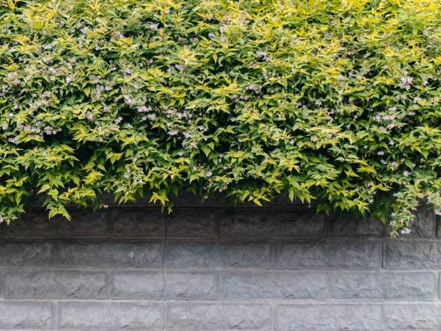 shrub bush over wall