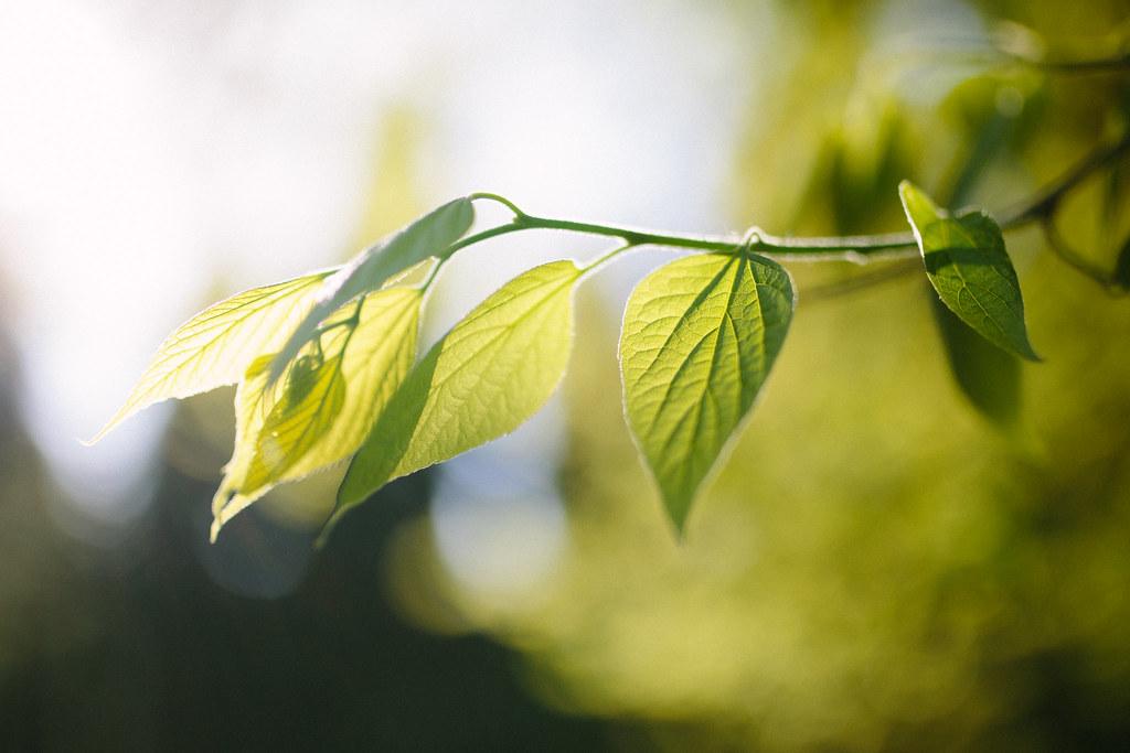 Yaprak Fotoğafları