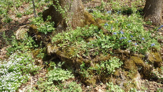 base of a tree surrounded by many types of wildflowers