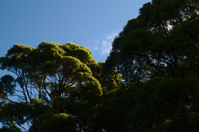 Photo circle: sun in the eucalypts