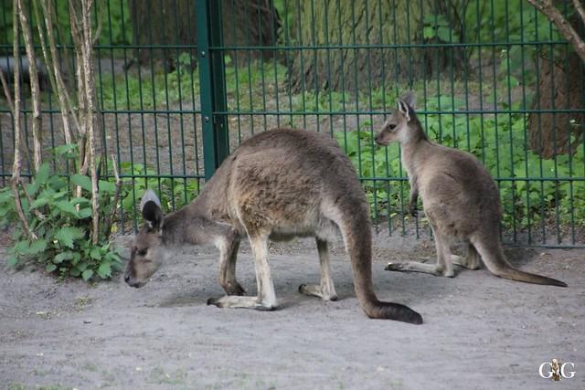 Tierpark Friedrichsfelde 17.05.201518