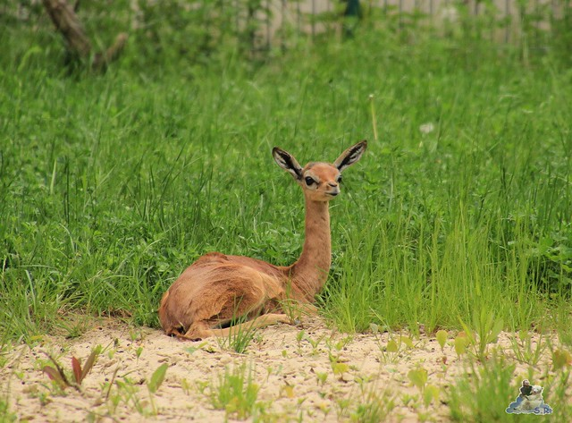 Tierpark Berlin 10.05.2015  84