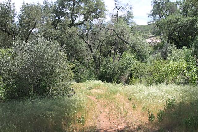 Leulf Preserve