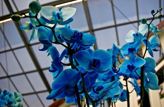 Keukenhof flower show - Orchids