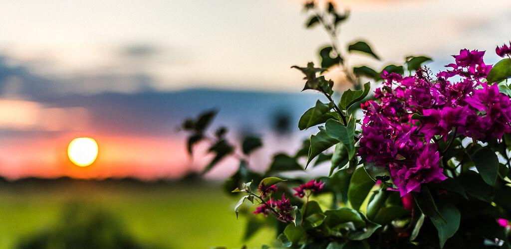 Flowers in Sunrise | 140404_Mato_Grosso_0005 | Cristian ...
