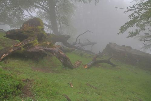 Parque natural de #Gorbeia #Orozko #DePaseoConLarri #Flickr -073