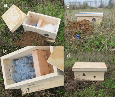Bumblebee Artificial Nest Box Designs Bumblebee Nest Box