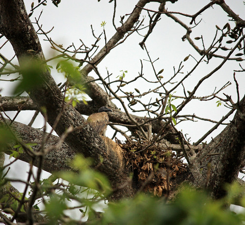 vulture's nest