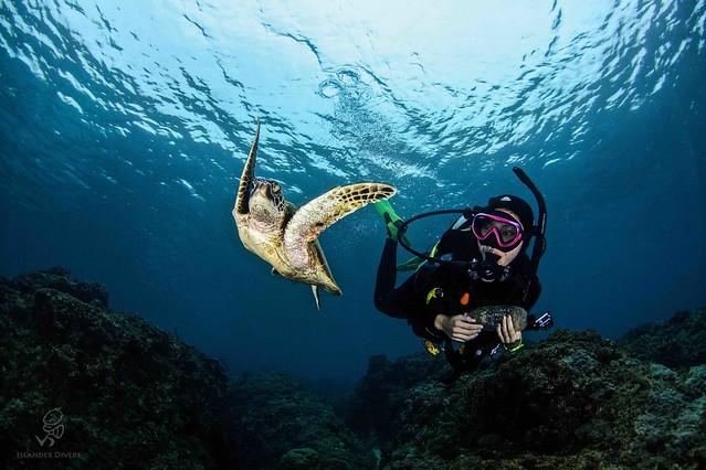 島人邀請同為島人的你一同優游海底風光。圖片來源:島人。Islander。