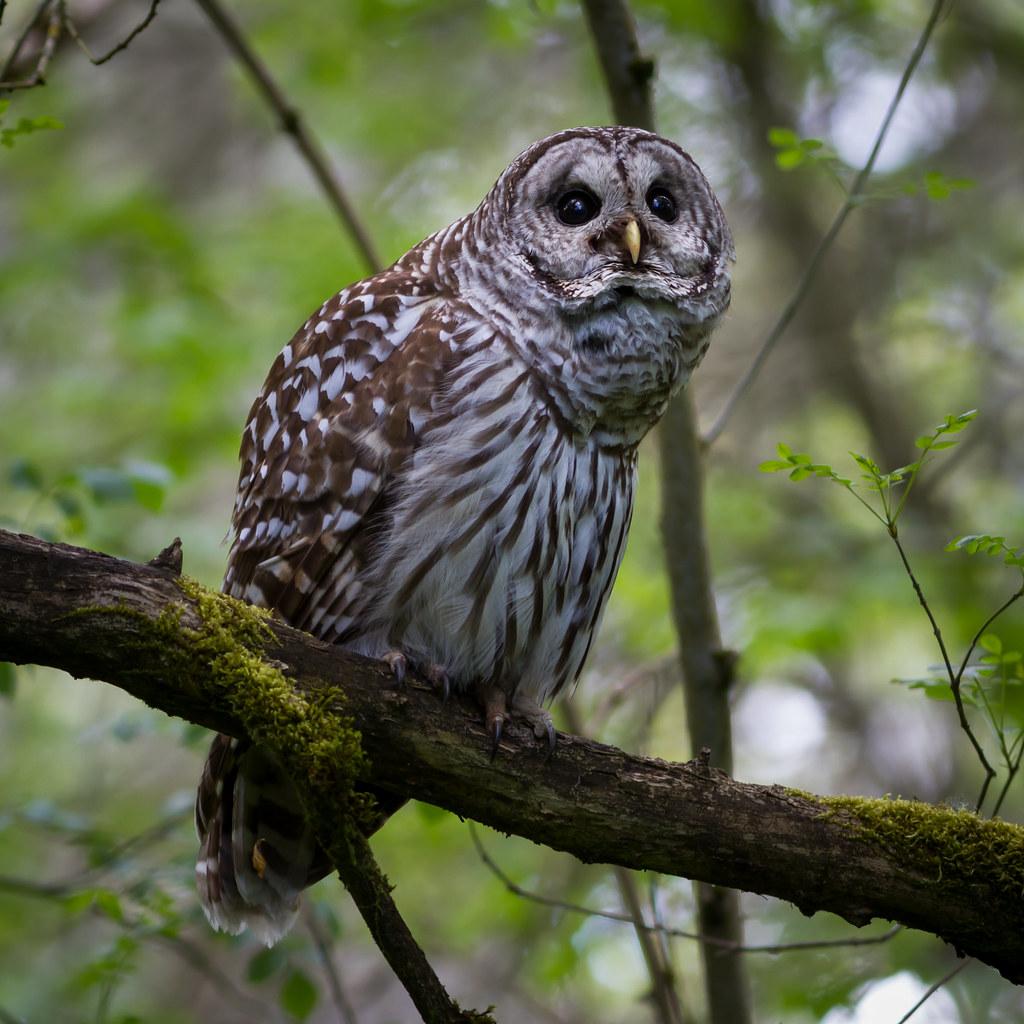 FARMERS MARKET, HARVEST PICNIC AND NEIGHBORHOOD OWL ...  Owls Portland Oregon