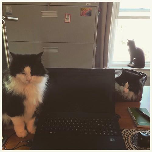 Felix, Oscar, & Mei-Mei