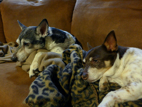 2015-05-23 - Peedee & Rennie - 0003 [flickr]