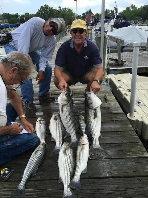 Photo courtesy of Jay Bernstein, showing catch of striped bass