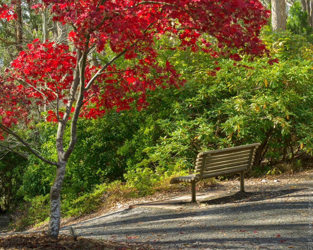 20150422 Mount Lofty Botanic Garden-21