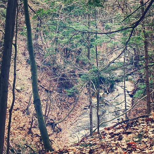 Looking into the gorge at Chestnut Ridge. #ChestnutRidge #wny