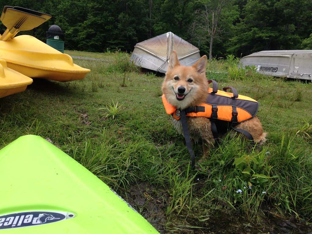 Dogbird daily ein kayak adventures for Hopewell fish and game