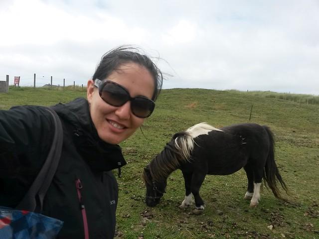 Shetland Islands - Pony